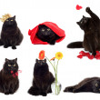 Black cats isolated collage of six photos — Stock Photo
