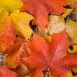 Colorful maple leaves background — Stockfoto