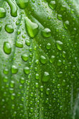 Fresh green leaf with water droplets — Stock Photo