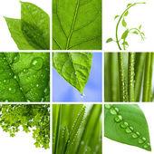 Collage van verse groene bladeren — Stockfoto