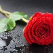 Beautiful red rose with water droplets over black background — Stock Photo