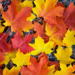 Colorful autumn leaves background — Stockfoto #3594724