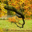 Autumn tree branch — Stock Photo
