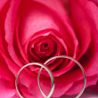 Foto Stock: Gold wedding rings and pink rose isolated