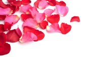 Red and pink rose petals isolated — Stock Photo