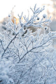 Beautiful frozen winter plant — Stock Photo