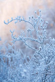 Beautiful frozen winter bush — Stock Photo