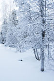 Snowy winter landscape — Stock Photo
