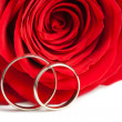 Gold wedding rings and red rose isolated — Stock Photo