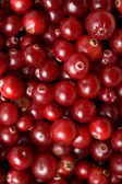 Red cranberries background — Stock Photo
