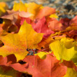 Colorful autumn leaves background — Stock Photo #3750328
