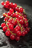 Redcurrant with water drops over black — Stock Photo