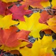 Colorful autumn leaves background — Foto Stock