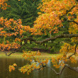 Stock Photo: Beautiful autumn tree