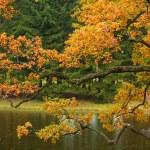 Beautiful autumn tree — Stock Photo
