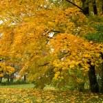 Autumn park — Stock Photo #3788561