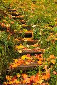 Steps into autumn — Stock Photo