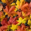 Colorful autumn leaves background — 图库照片