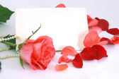 Flower of a rose, petals and card. — Stock Photo