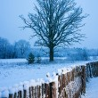 Stock Photo: Beautiful winter scenic