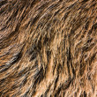 Fur texture — Stock Photo #4744048
