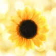 Sunflower over abstract background — Stock Photo #4744178