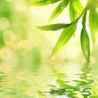 Bamboo leaves reflected in rendered water — Stock Photo