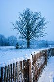 Beautiful winter scenic — Stock Photo