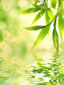 Bamboo leaves reflected in rendered water — Stok fotoğraf