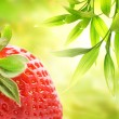 Ripe strawberry over abstract green background - Stock Photo