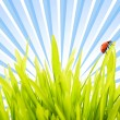 Ladybug sitting on a green grass — Stock Photo