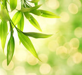 Bamboo leaves over abstract blurred background — Stock Photo