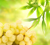 Ripe grapes over abstract green background — Stock Photo