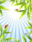 Coccinelle seduto su foglie di bambù — Foto Stock