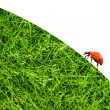 Stock Photo: Ladybug sitting on a green grass