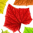 Colorful autumn leaves. Isolated on white background — Stock Photo