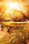 Sunshine in an autumn forest — Stock Photo