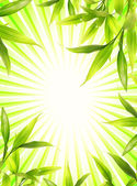 Bamboo plant frame over abstract green background — Stock Photo