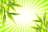 Bamboo plant over abstract green background — Stock Photo