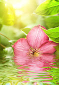Pink flower reflected in rendered water — Stock Photo