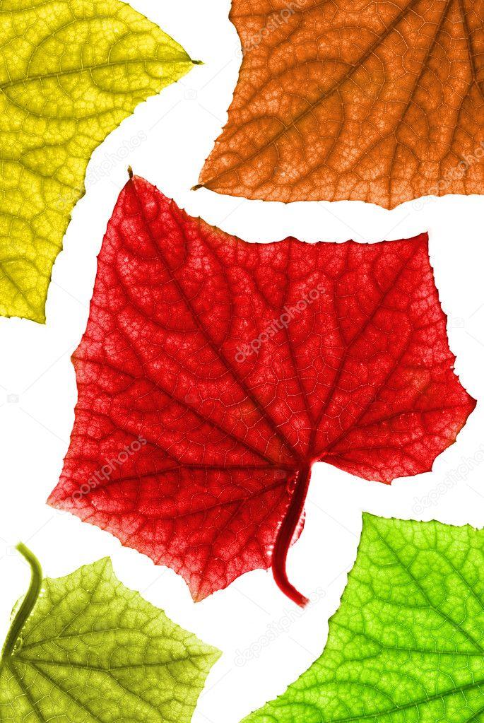 Кофта Осенние Листья С Доставкой