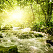 Sunshine in a forest — Stock Photo