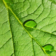 Green leaf texture with water drops on it — Stock Photo
