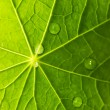 Green leaf texture with water drops on it — Stock Photo #4800518
