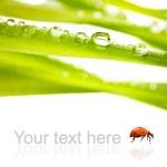 Зеленая трава с каплями воды на ней изолированные на белом фоне — Стоковое фото