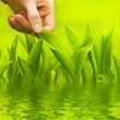 Human hand touching green grass — Stock Photo #4800580