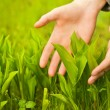 Human hands touching green grass - Stock Photo