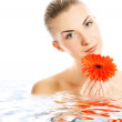 Beautiful young woman with gerber flower reflected in rendered w — Stock Photo #4804319