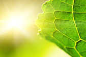 Green leaf (shallow DoF) — Stock Photo
