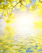 Yellow leaves reflected in water — Stock Photo